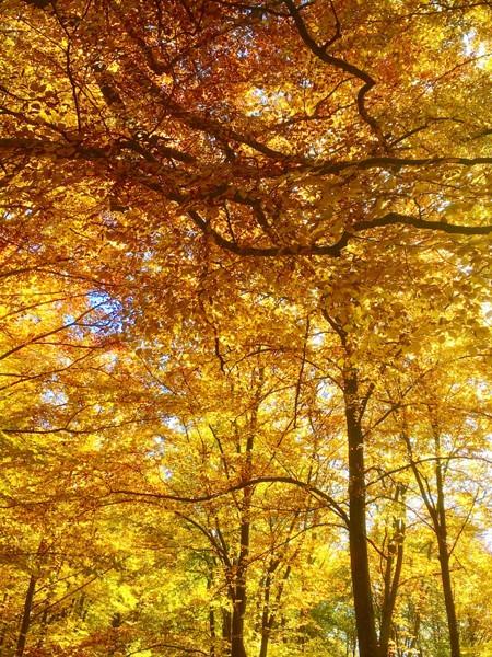Waldbäume im Herbst mit gelbroten Blätterverfärbungen die die Naturverbundenheit zum Ausdruck bringen sollen